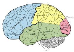 Brain Illusion